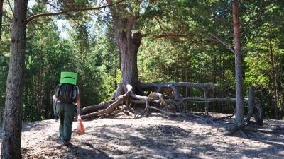 Обеденное дерево