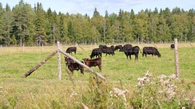 Лесные коровки