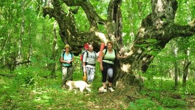 Сказочное дерево при подъеме к Байдарским воротам
