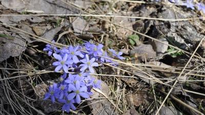 Приветы весны
