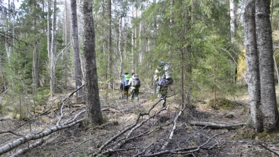 Все глубже в лес