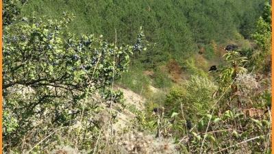 Гора Кара-Тепе