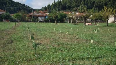 Посадки кактусов