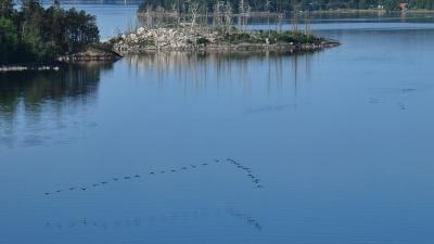 Птичий клин над водой