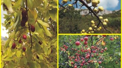Плоды щедрого Крыма