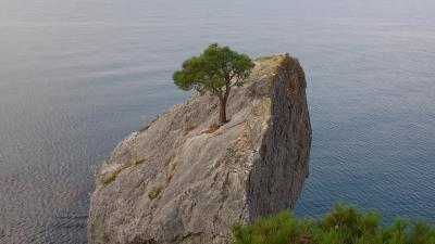 Сосна на скале Секира