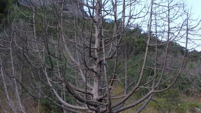 Замерзшие деревья в долине Рая