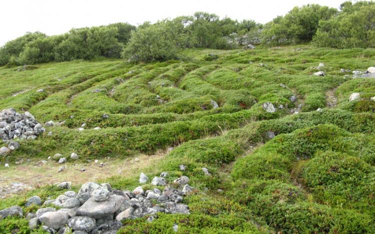 Лабиринты Б.Заяцкого острова