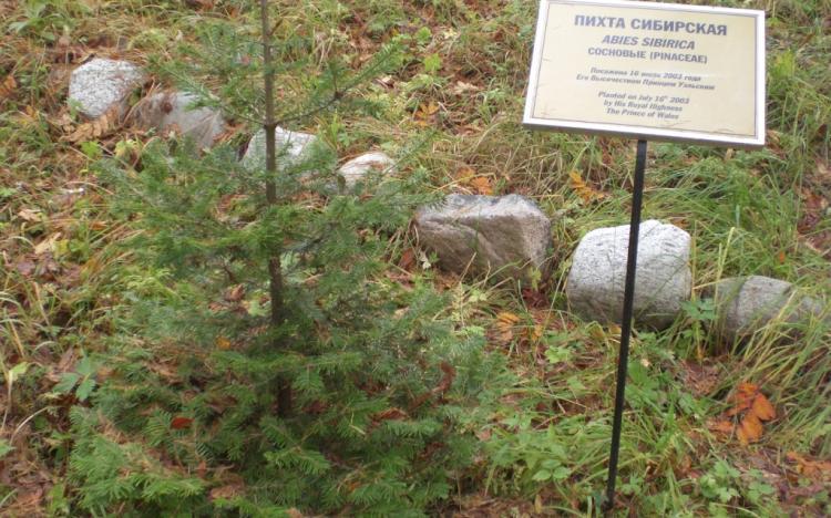 Посадки знаменитостей в ботаническом саду