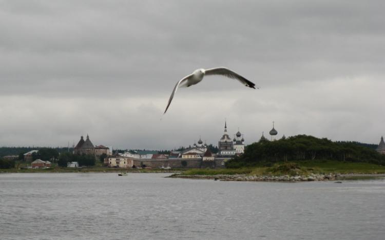 Соловецкая чайка - символ островов